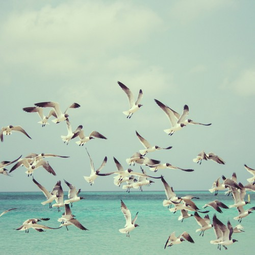 Beach, Sea, Seagulls 815304 1920